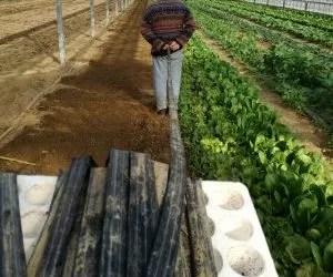 Manichetta per irrigazione avvolta sul polistirolo