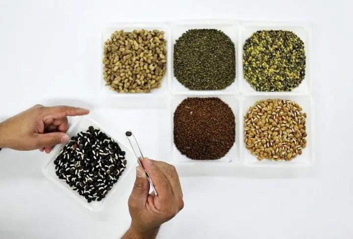 I semi degli ortaggi