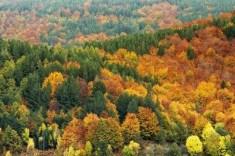 Parco Nazionale della Sila in autunno