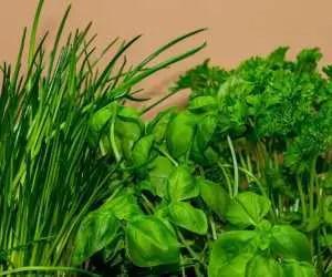 Basilico e altre piante aromatiche
