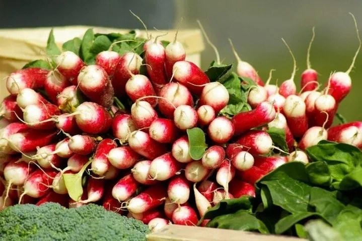 Come coltivare ravanelli a punta bianca