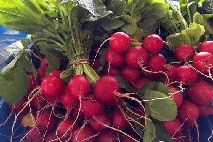 Come coltivare ravanelli in un orto domestico