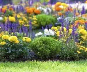 Piante da fiore in aiuola