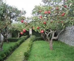 Piantare un albero da frutto in giardino