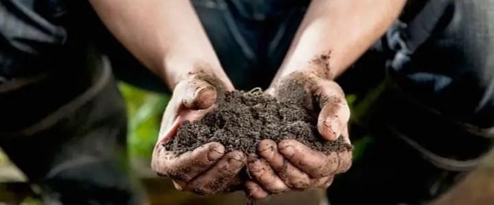 Il pH del terreno, significato e implicazioni sulle colture