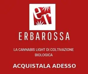 Cannabis legale di Erbarossa