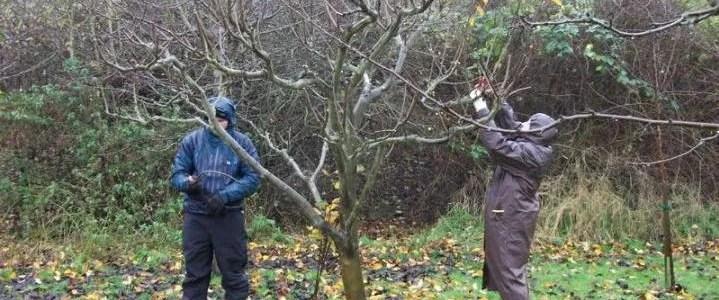Alberi da frutto archivi coltivazione biologica for Potatura del melo