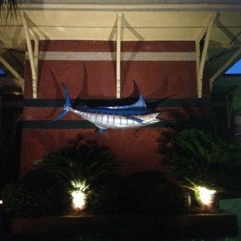 blue-marlin2