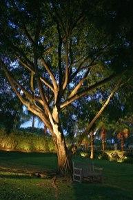 residential-landscape-tree