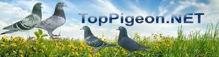 toppigeon.net