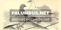 palumbus.net