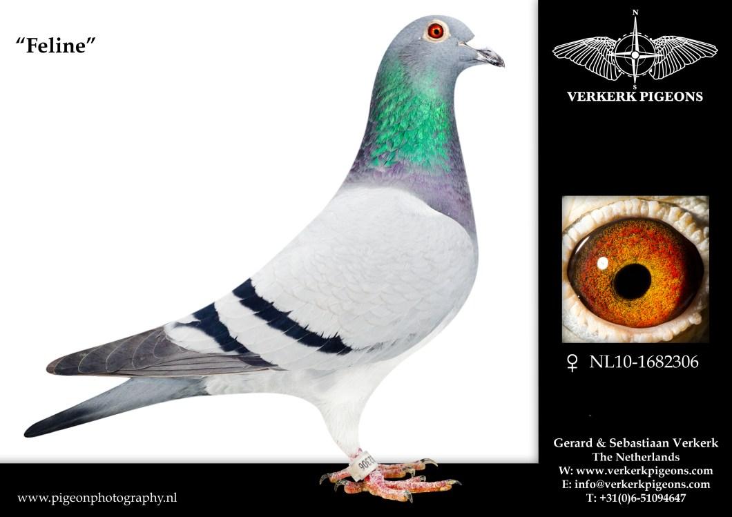 VerkerkNL10-1682306