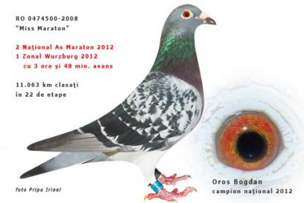 474500+F+08-Femela-Bogdan-+-ochi-500p-431x288