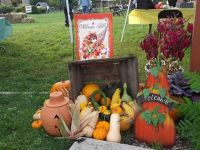 fall harvest fair Stratford Ecological Center Fall Harvest Fair
