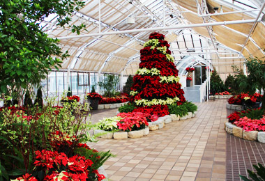 Conservatory Aglow