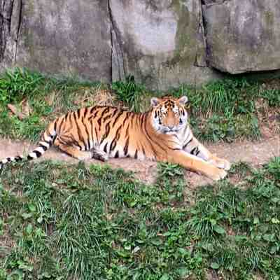 zoo bus, veterans day, father's day, Jack Hanna's Fall Fest