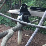 Moms get in FREE for Mother's Day at Columbus Zoo