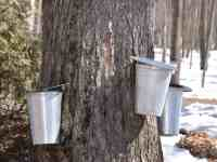 maple syrup tours