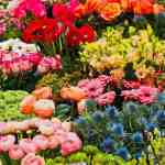 Order now for the no-contact German Village Plant Sale