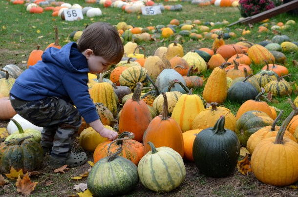 Pumpkin Patches Farm Activities Corn Mazes And More Columbus On The Cheap
