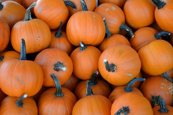 Pumpkin Patches, Farm Activities, Corn Mazes, and More