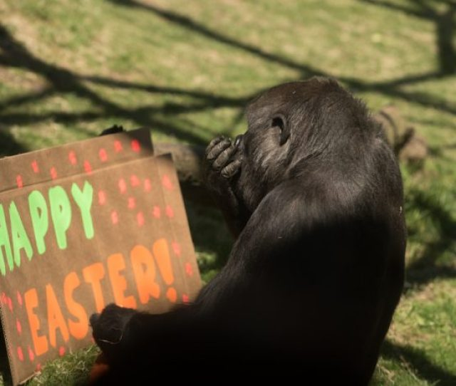 The Zoo Is Also Hosting An Easter Bunny Brunch On Saturday March  Am Youll Enjoy A Kid Friendly Brunch Buffet Meet And Greet And A Photo With