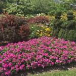 The most beautiful public gardens in Columbus and upcoming plant sales