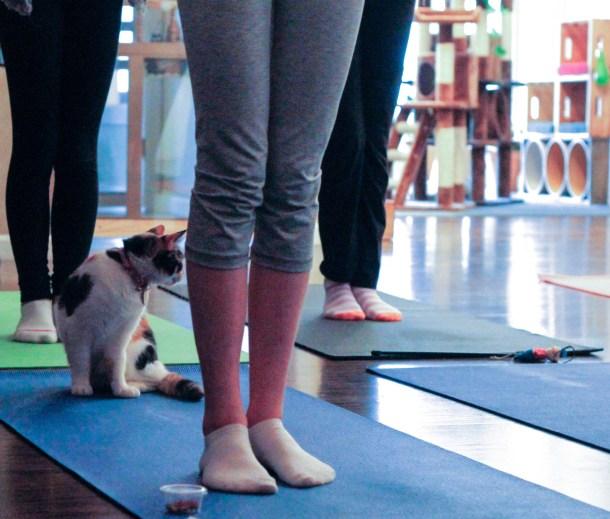 yoga in Columbus