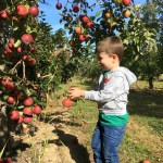 U-pick: Best places to pick apples in Columbus