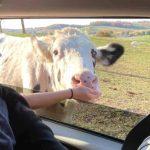 Fall Festival at The Farm at Walnut Creek, plus Drive-thru or Wagon Rides