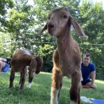 Christmas Tree donations, Farm Stands and Goat Yoga at Harrison Farm