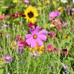 Free wildflower seeds from ARM & HAMMER™