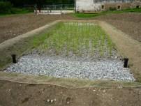 Projet de SNEP: plantation des roseaux