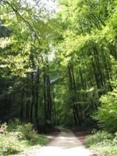 Chemin de la Combe Tabeillon
