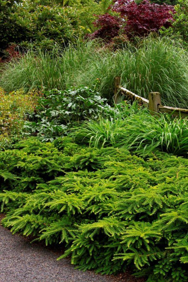 shrubs - combs landscape