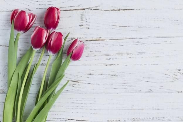 tulipani in casa comecosaquando