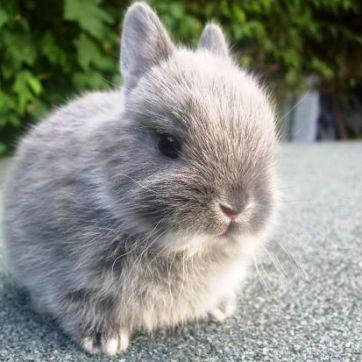 cuantas-razas-de-conejos-hay-1_opt