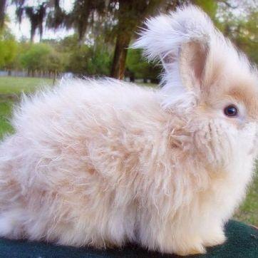 cuantas-razas-de-conejos-hay-7_opt