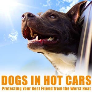 text: dogs in hot cars image: dogs head hanging from a car window on a sunny day