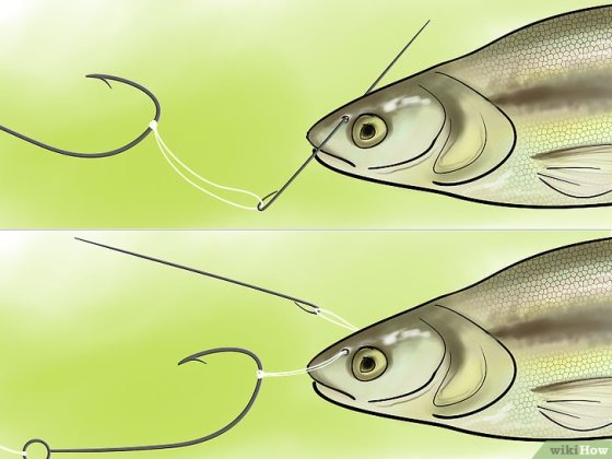 Immagine titolata Bait a Fishing Hook Step 23