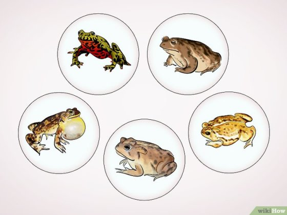 Immagine titolata Care for a Toad Step 16