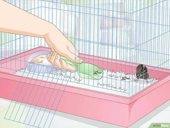 Immagine titolata Litterbox Train Your Rat Step 7