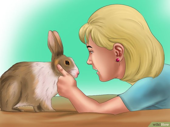 Immagine titolata Pet a Rabbit Step 2