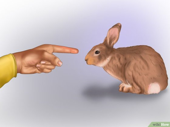 Immagine titolata Pet a Rabbit Step 5