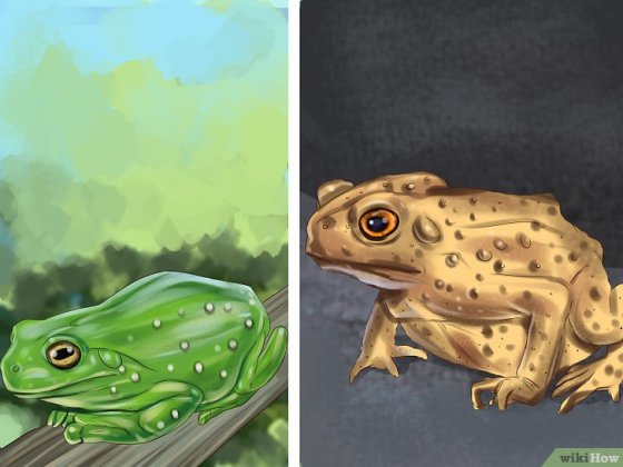 Immagine titolata Tell the Difference Between a Frog and a Toad Step 4