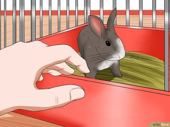 Immagine titolata Tame Your Rabbit Step 2