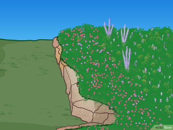 Immagine titolata Create Natural Edging for a Garden Step 4