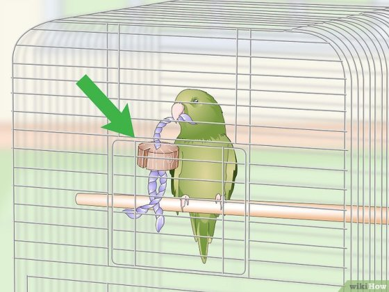 Immagine titolata Set Up a Parrotlet Cage Step 8