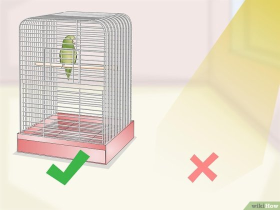 Immagine titolata Set Up a Parrotlet Cage Step 9
