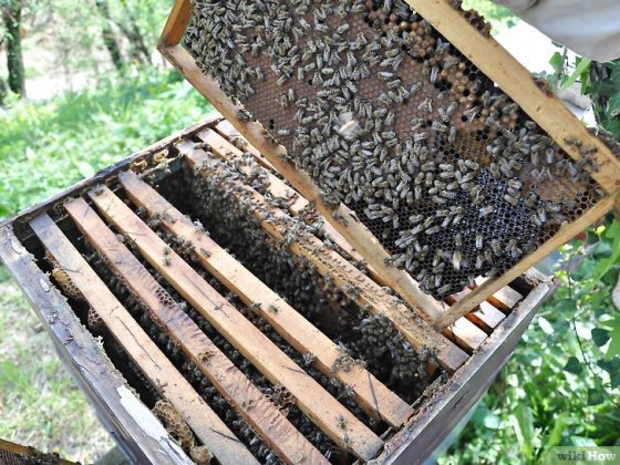 Immagine titolata Become a Beekeeper Step 6